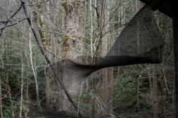 goldman_vivien_Elkmont-Smokey-Mountains-National-Park06